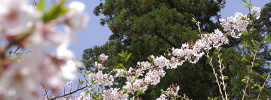 東国花の寺 百ヶ寺